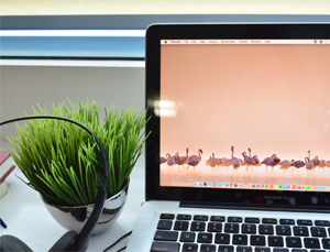 A MacBook beside a tiny plant